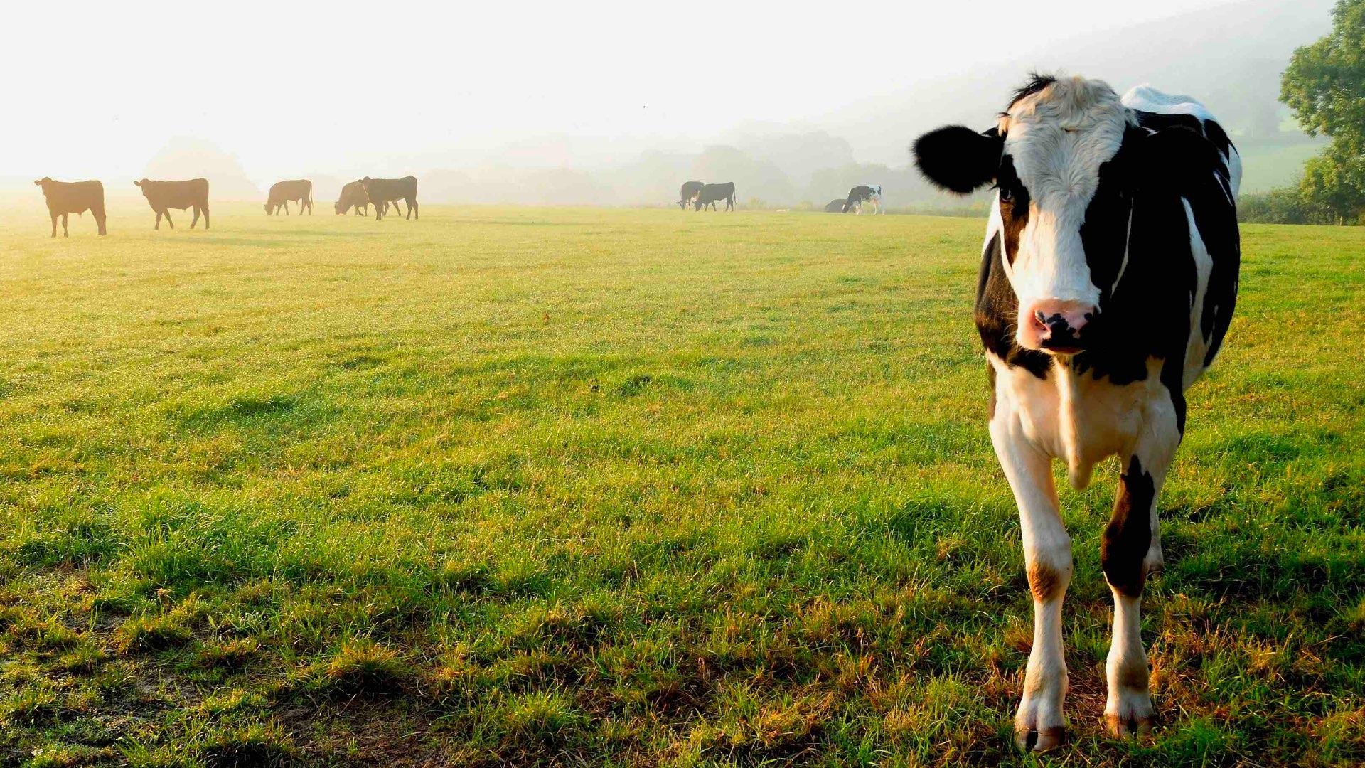 Guide to transferring your Devon farm